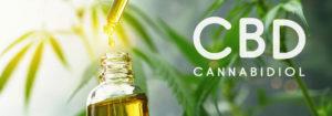 Utilisation des huiles au CBD